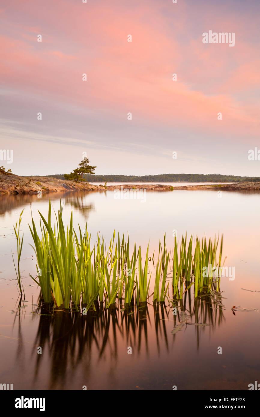 Sommer auf der Insel Brattholmen in den See Vansjø, Råde Kommune, Østfold Fylke, Norwegen. Stockbild