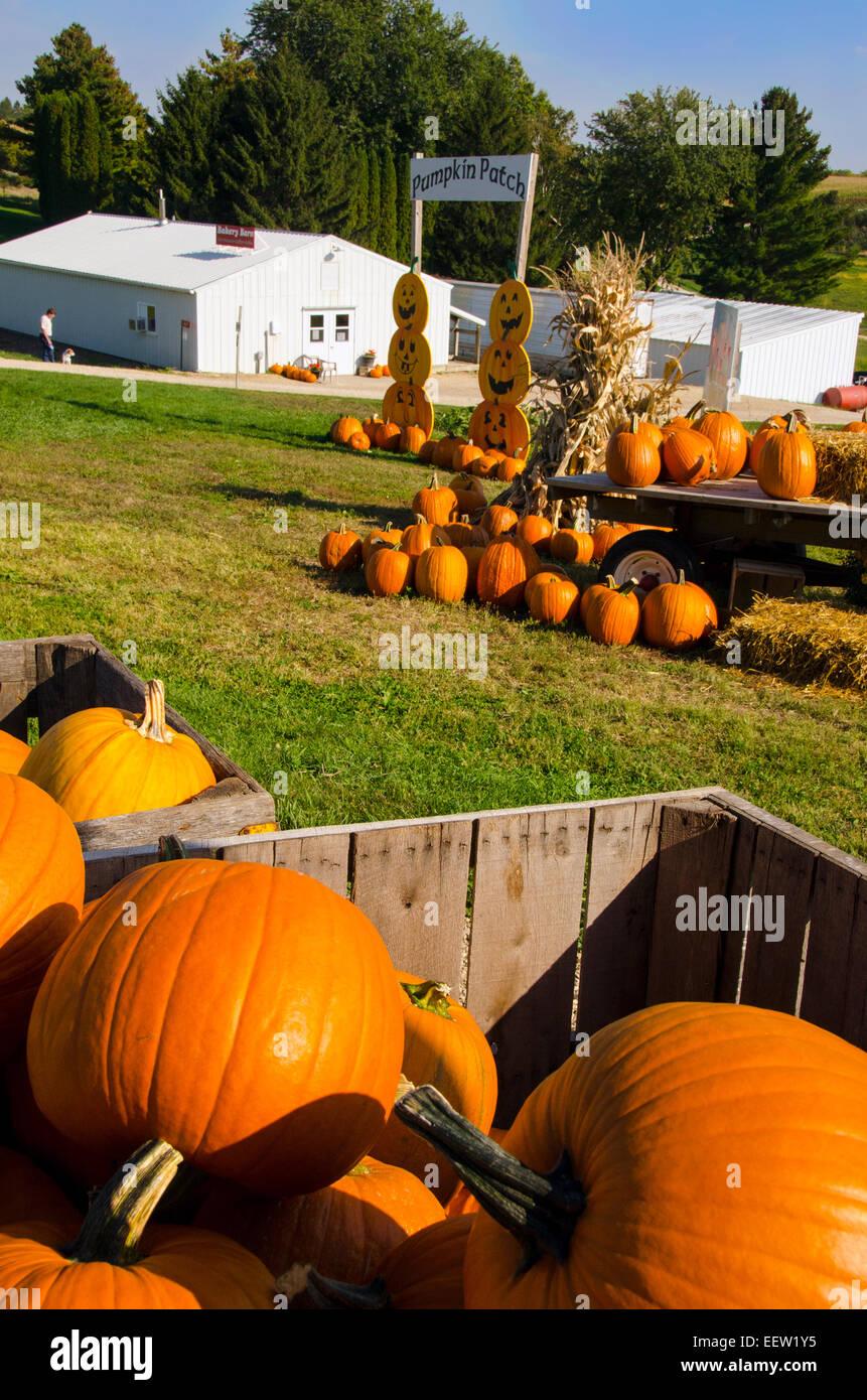 Kürbisse zum Verkauf an Shihatas Obstgarten und Apple House in der Nähe von Prairie du Chien, Wisconsin Stockbild