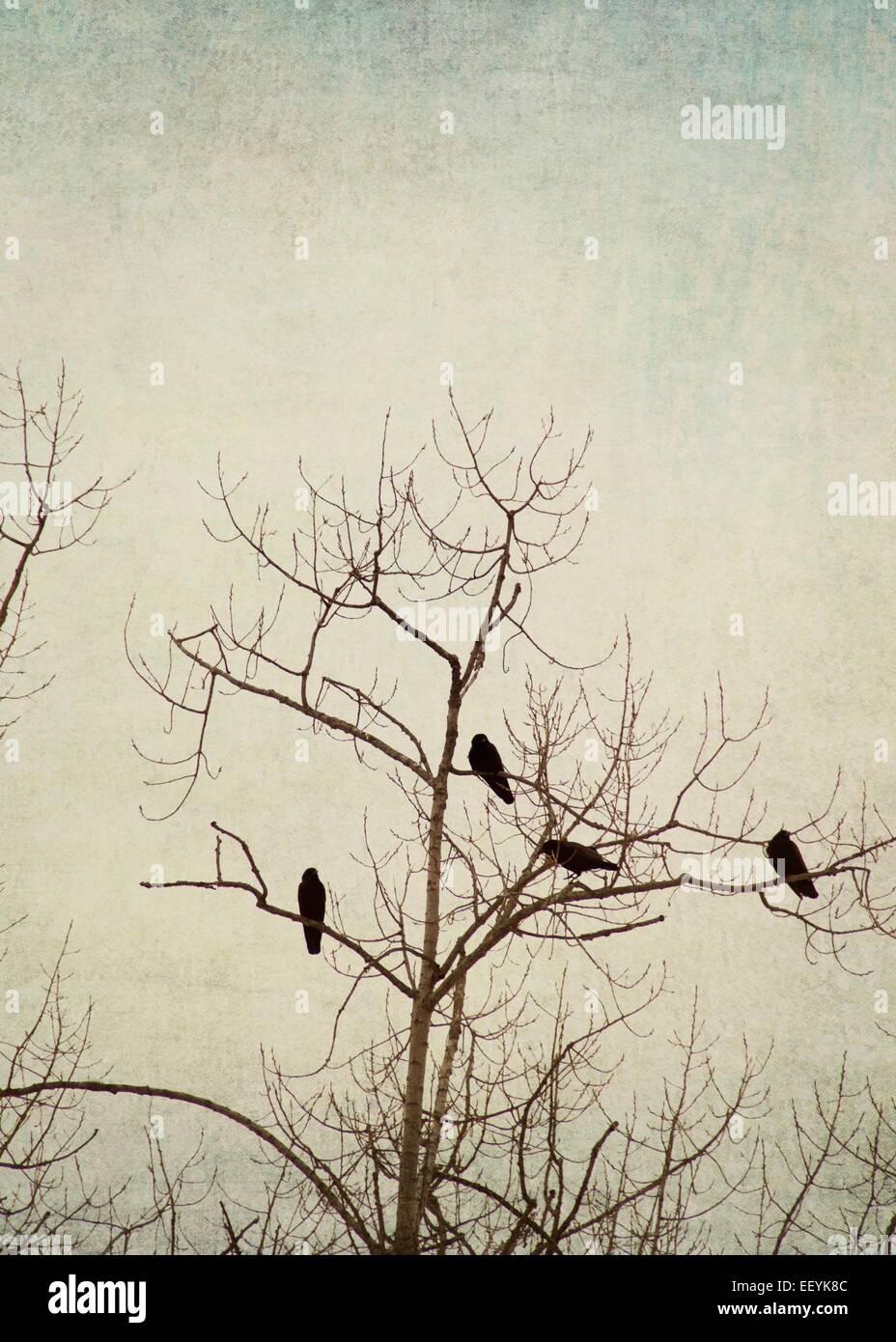 Vögel in einem Baum im Winter thront. Stockbild