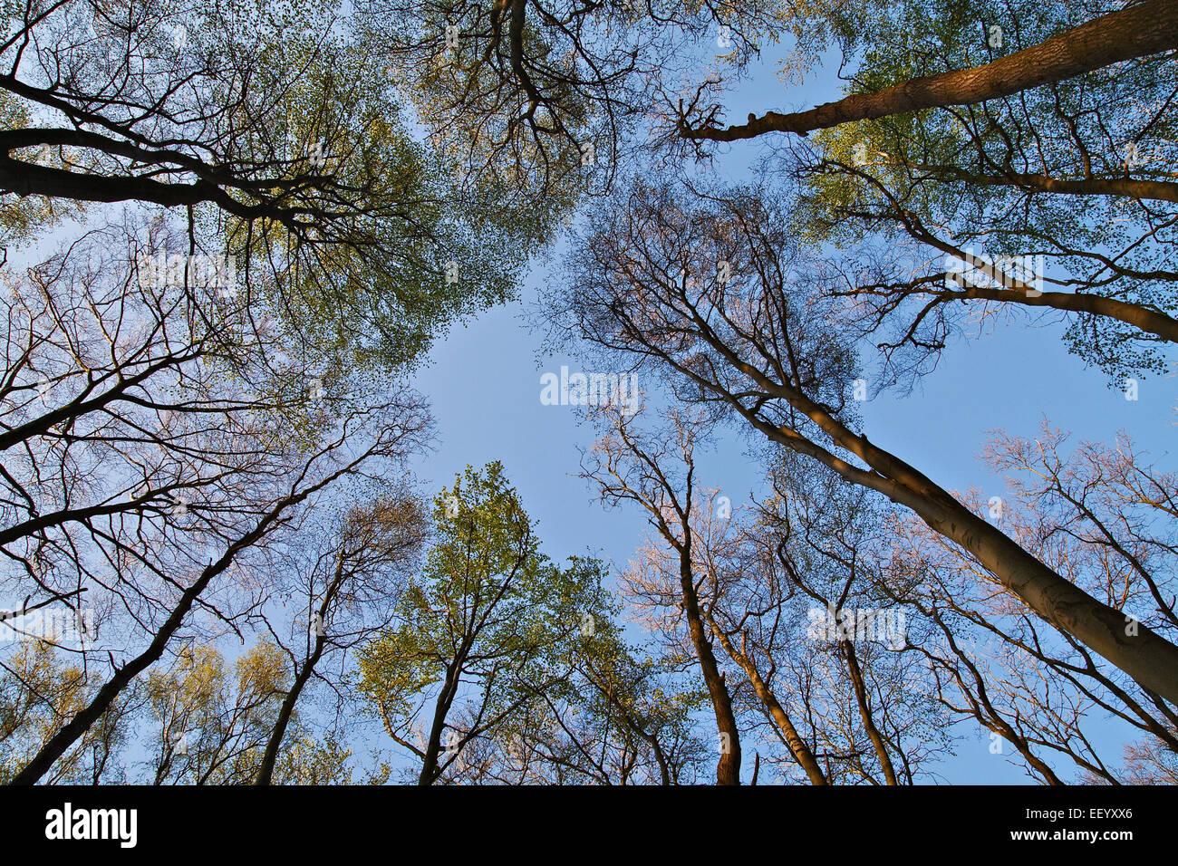 Baumkronen im Wald. Stockbild