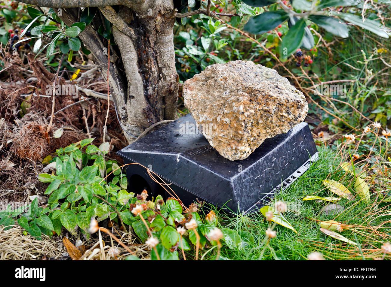 Ratte-Box; Erkennt Ratten; St Agnes; Isles of Scilly; UK Stockbild