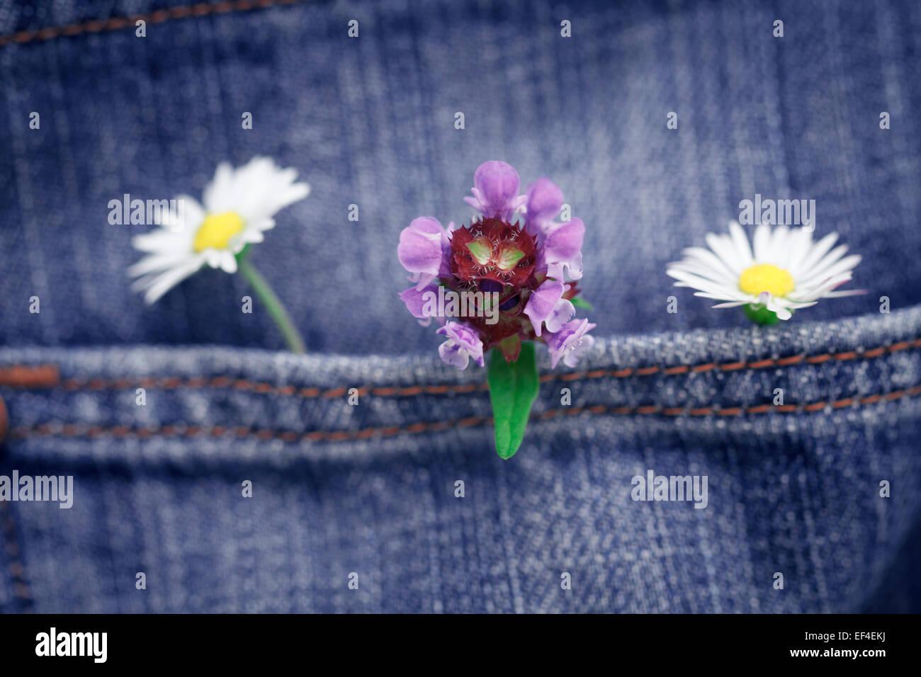 Konzept, Blumen in einer Tasche Jean Hose Stockbild