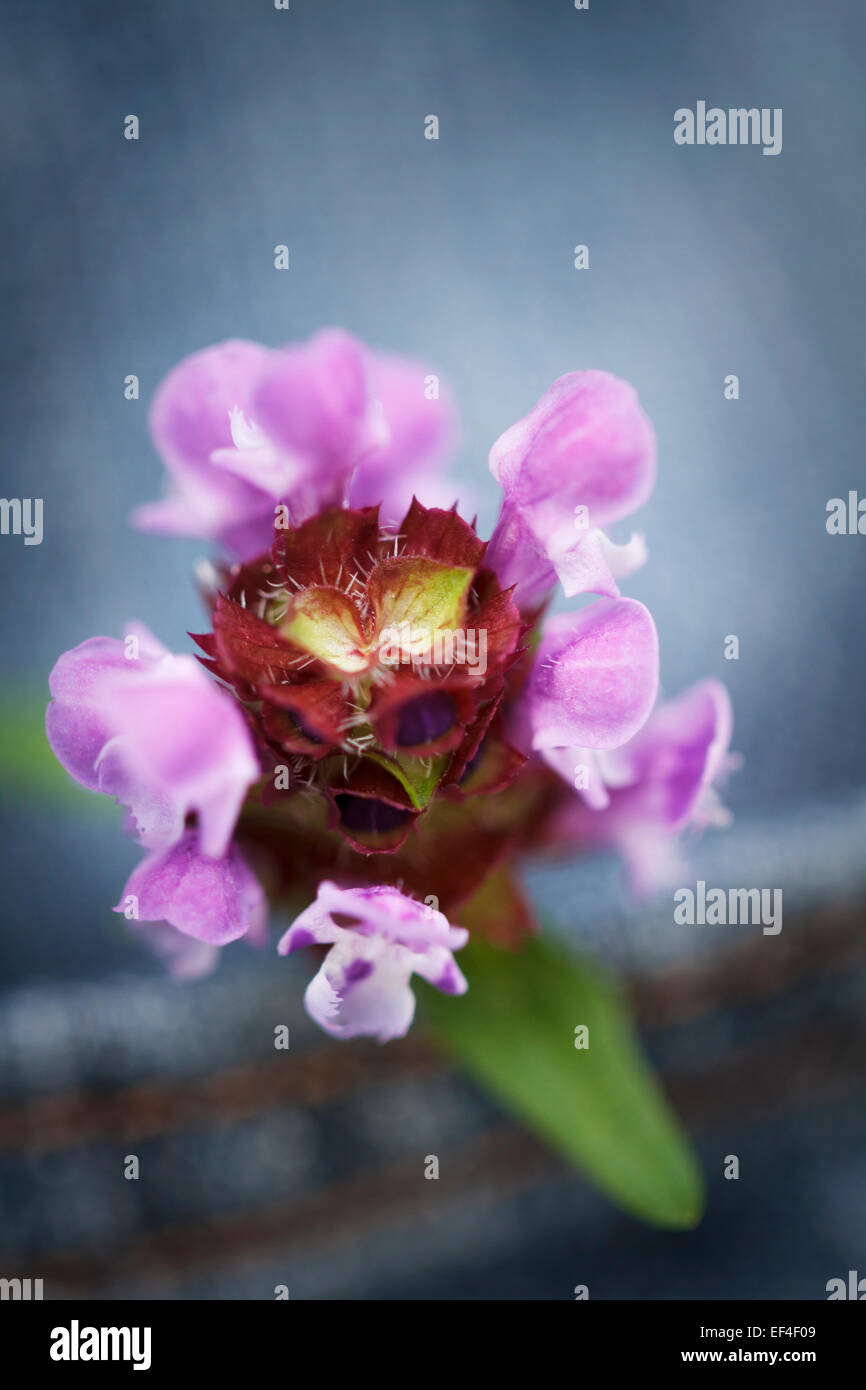 Konzept, Blume in einer Tasche Jean Hose Stockbild