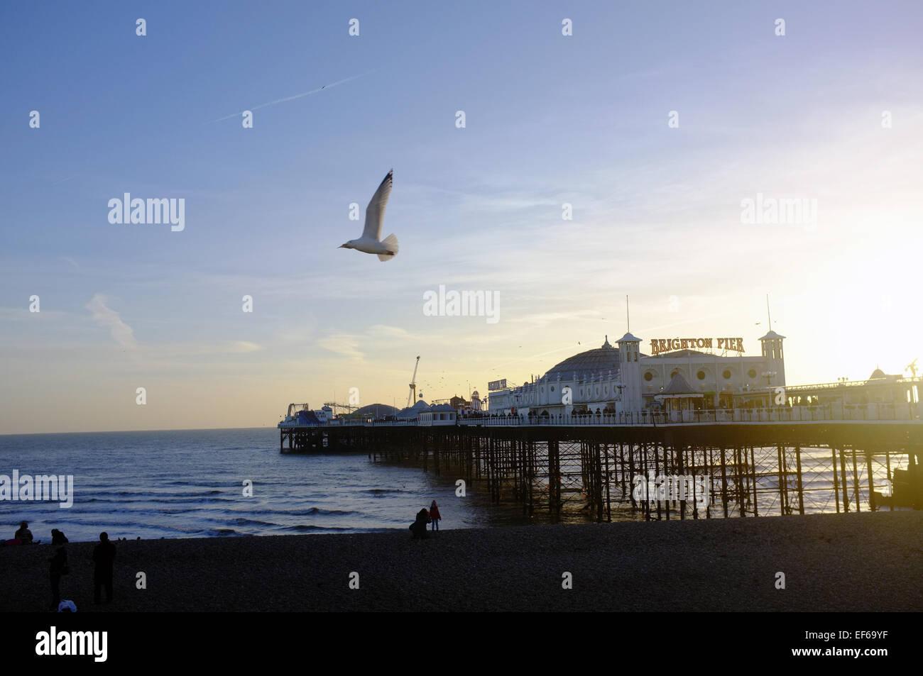 Eine Möwe fliegt vorbei an Brighton Pier bei Sonnenuntergang. Stockbild
