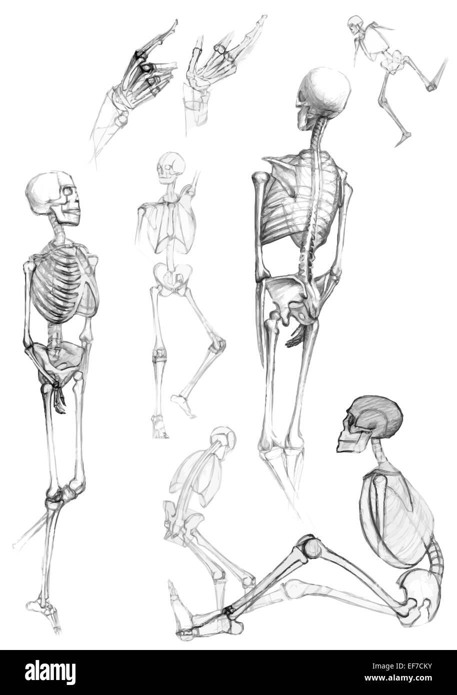 Eine Gruppe von isolierten menschlichen Körperteilen und Skelette in ...