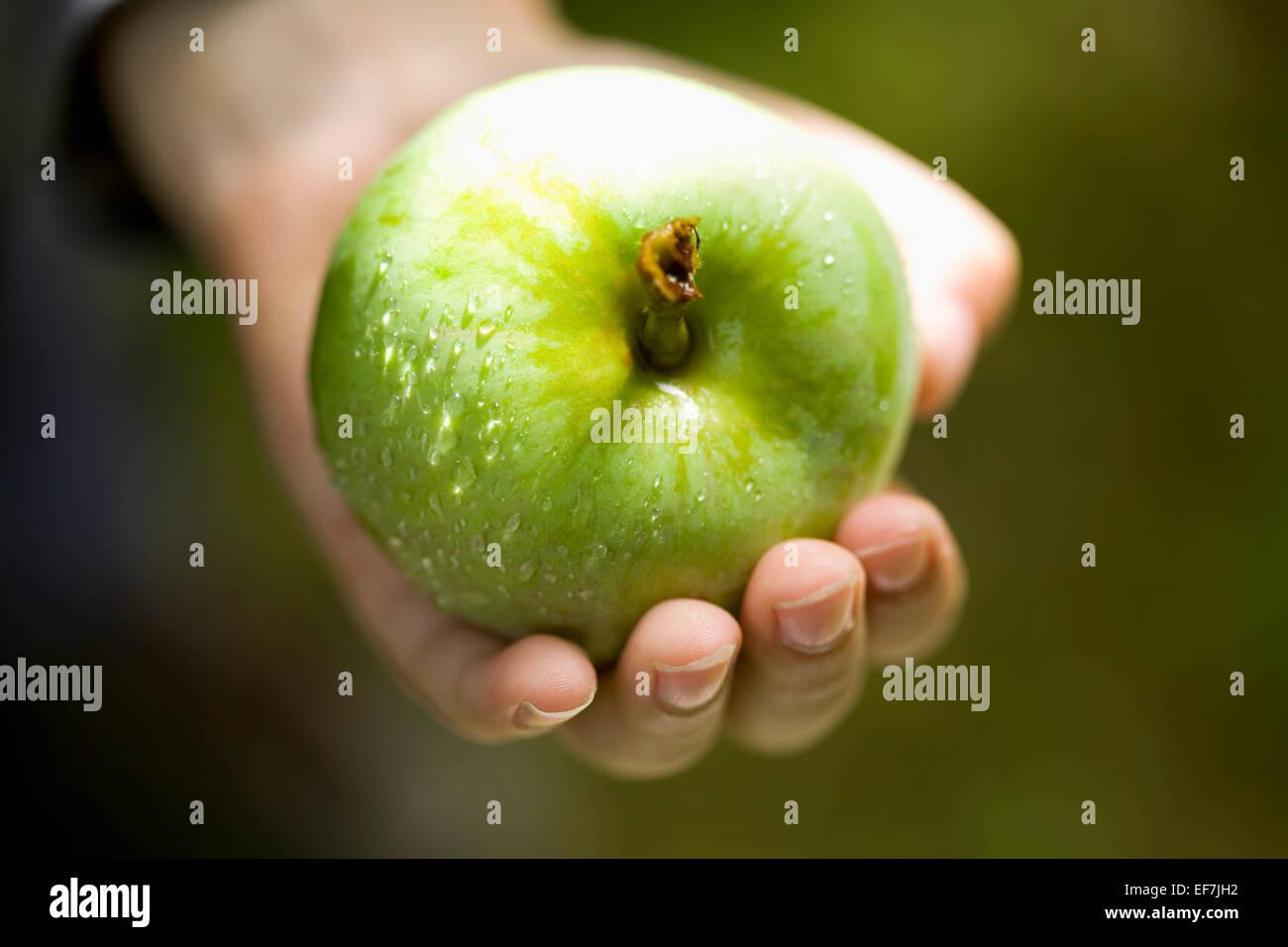Hand halten frischer grüner Apfel Stockfoto