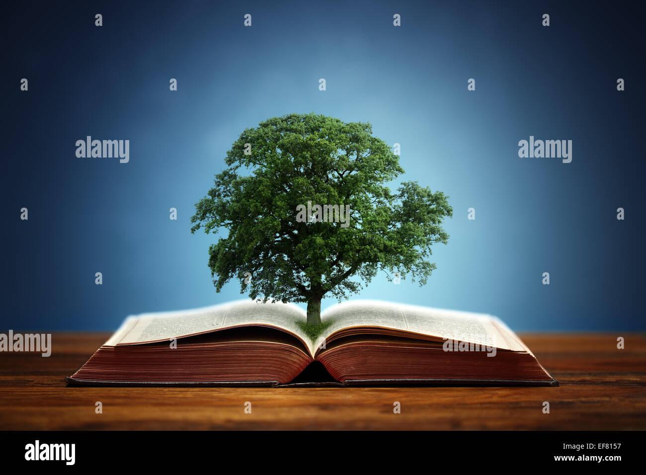 Baum der Erkenntnis Stockbild