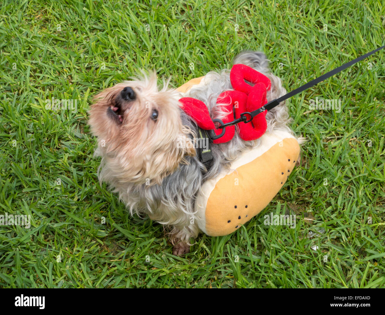 Hund Hot Dog Kostüm Stockfotos Hund Hot Dog Kostüm Bilder Alamy