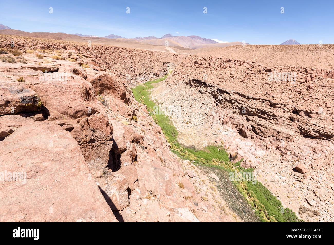 Üppig und grün Flussbett in der Nähe von San Pedro de Atacama, Chile, Südamerika Stockbild