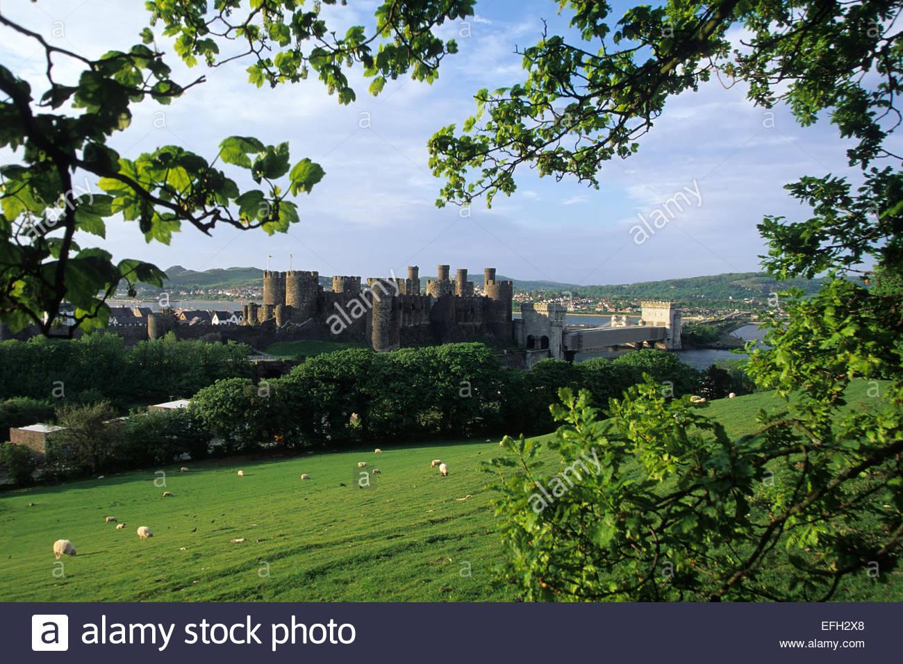 Conwy Castle, Wales Stockbild