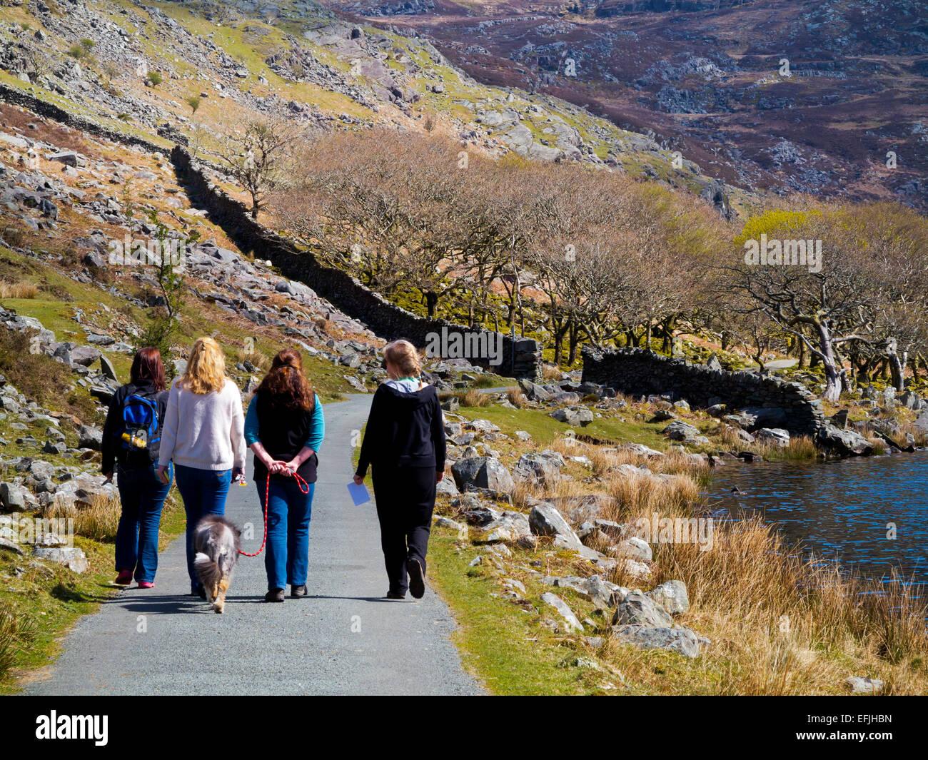 Vier Frauen mit einem Hund, einem Land genießen Fuß in Frühlingssonne am Carreg Y Saeth in Gwynedd Snowdonia North Stockfoto