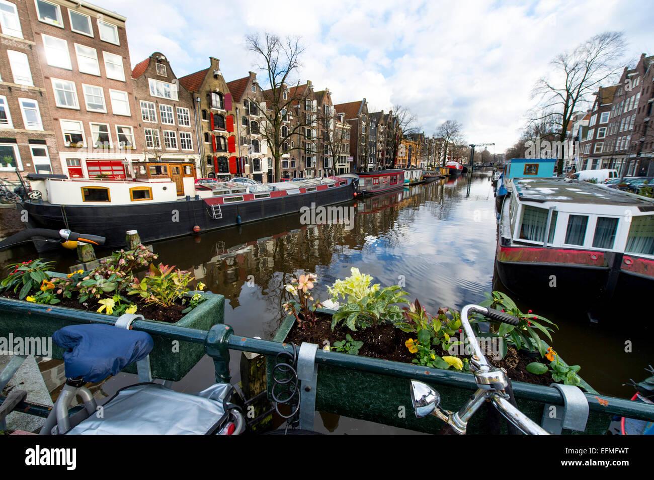 Licht Tour Amsterdam : Licht im winter auf einem kanal in amsterdam mit pflanzen und ein