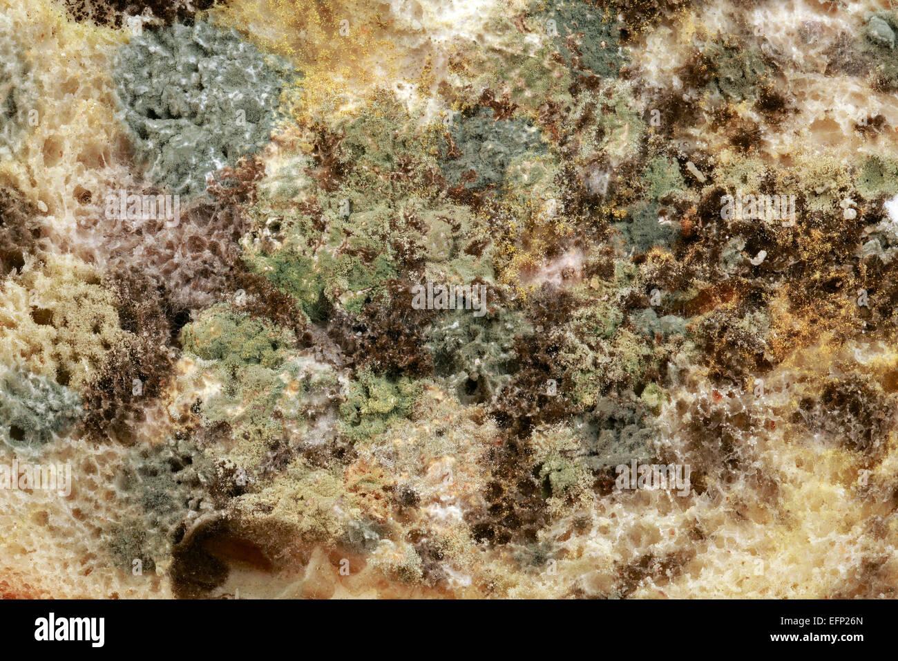 toxic mold stockfotos toxic mold bilder alamy. Black Bedroom Furniture Sets. Home Design Ideas