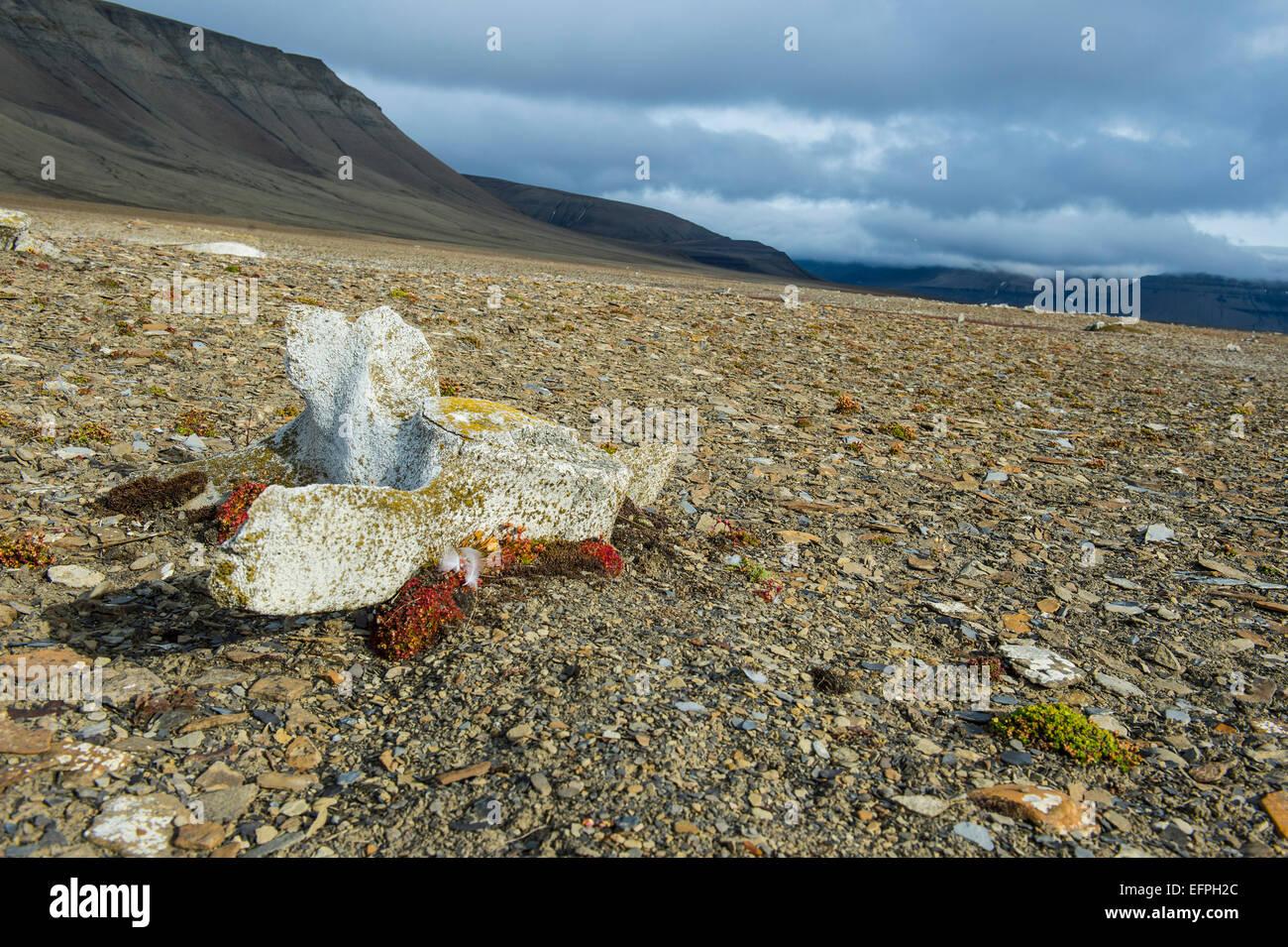 Wal-Knochen auf der Küste von Diskobukta, Spitzbergen, Arktis Stockbild