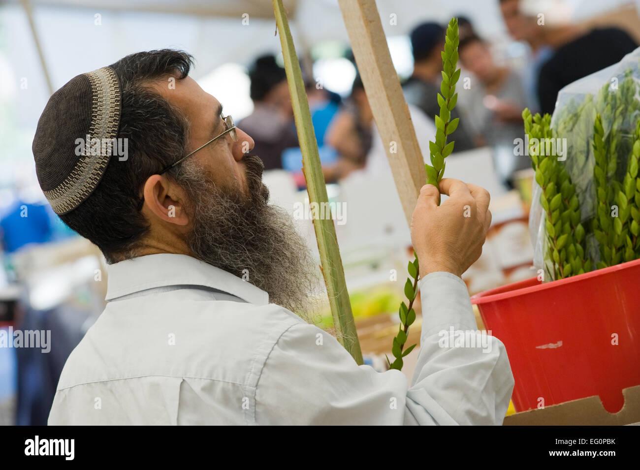 Ein orthodoxer Jude prüft eine Myrte Pflanze auf einem Markt in Jerusalem kurz vor dem Fest der Laubhütten Stockbild