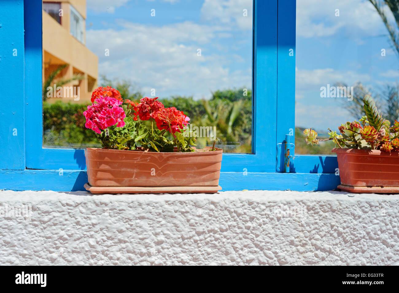 window geranium pelargonium flower stockfotos window geranium pelargonium flower bilder alamy. Black Bedroom Furniture Sets. Home Design Ideas