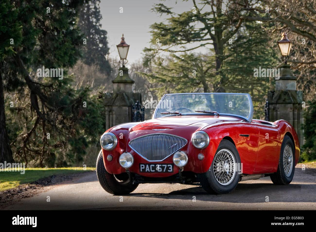 Austin Healey 100M britischen Sportwagen aus den 50er Jahren Stockbild