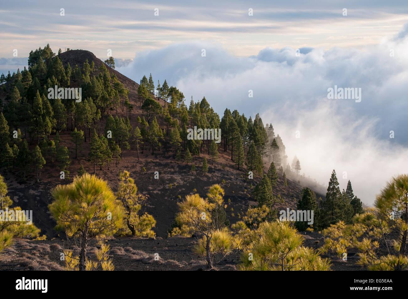 Passatwinde sind Klettern auf den Hängen der Kanareninsel La Palma Feuchtigkeit kondensiert und Passatwind Stockbild