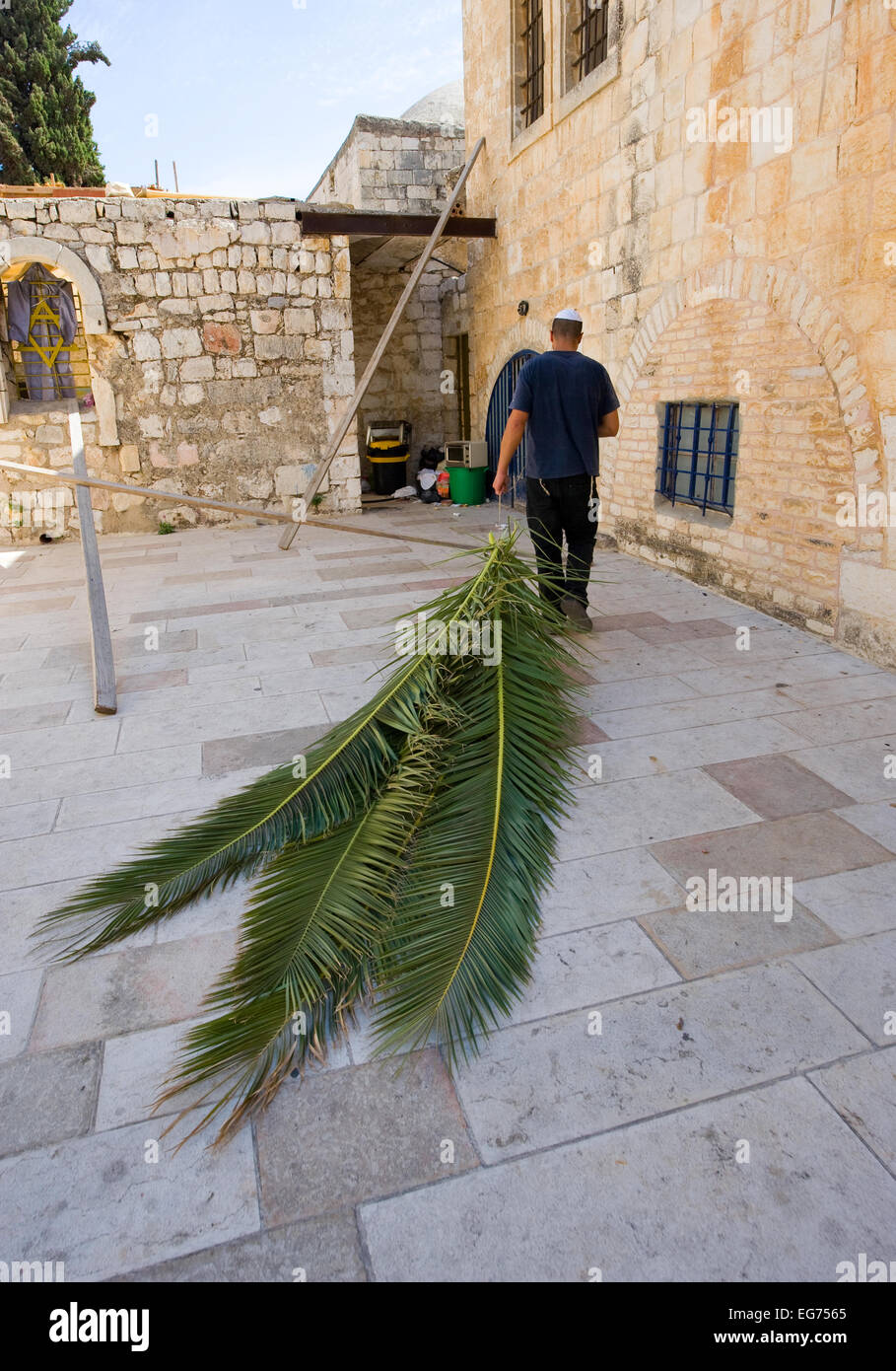 Ein jüdischer Mann zieht Palmblättern mit ihm vorzubereiten für das Laubhüttenfest Stockbild