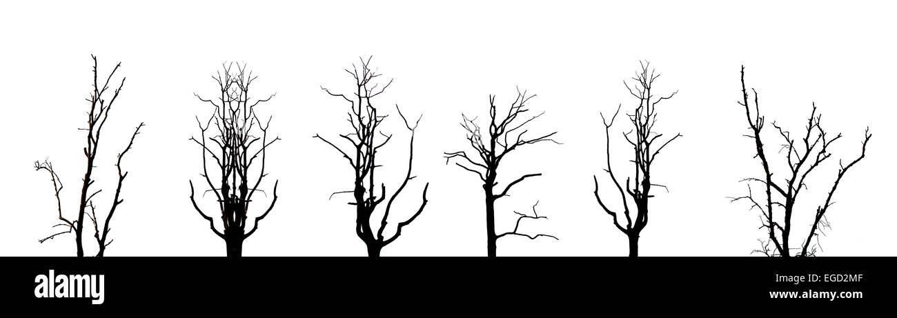 Old Oak Tree Without Leaves Stockfotos & Old Oak Tree Without Leaves ...