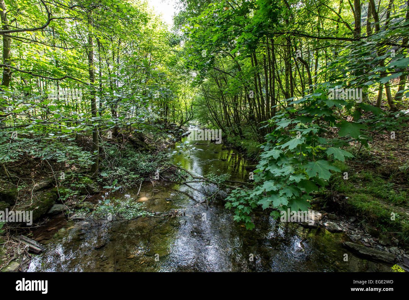 Kneippkur, Hydrotherapie im Fluss Ruhr, ein Themenweg Wandern im Sauerland, Deutschland, Stockbild