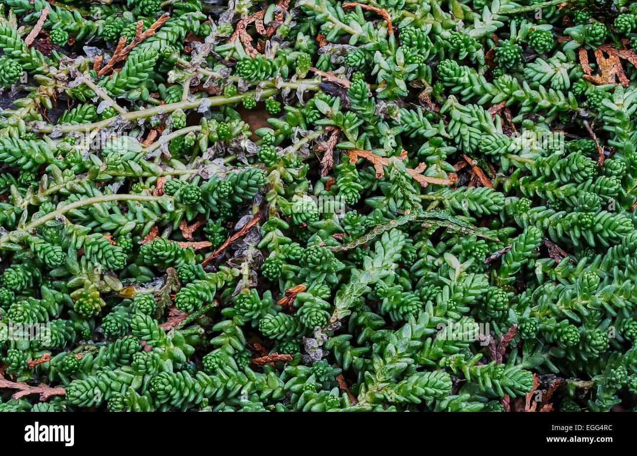 Ziergräser Im Garten Bilder nahaufnahme der immergrüne ziergräser im garten stockfoto bild