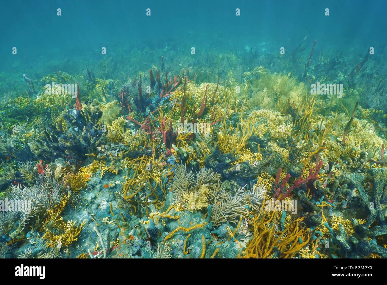 Unterwasserlandschaft an einem üppigen und bunten Korallenriff des karibischen Meeres Stockbild