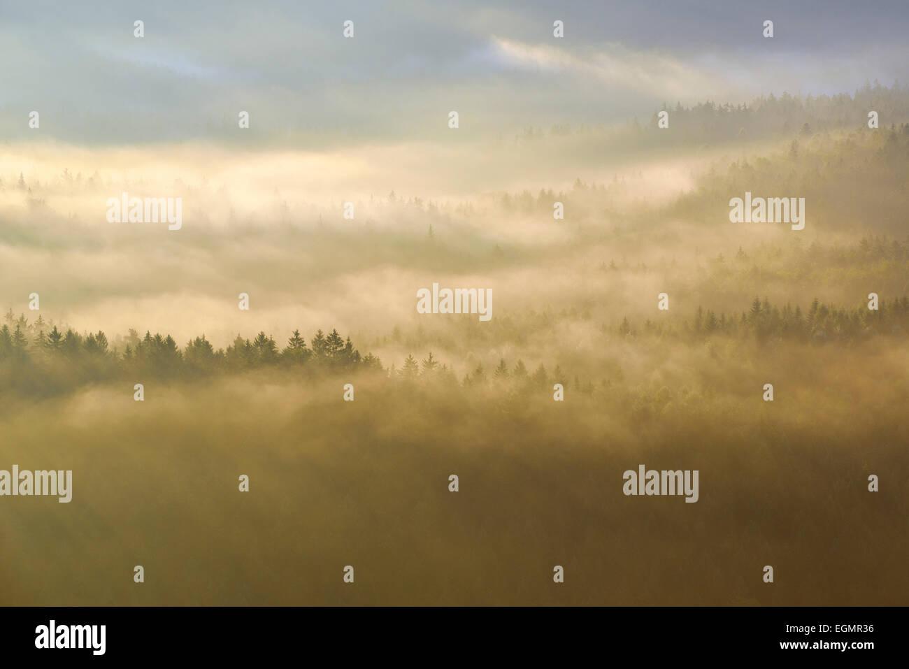 Nebel über den Baumwipfeln im Morgenlicht, Wald im Elbsandsteingebirge, Sächsische Schweiz, Sachsen, Deutschland Stockbild