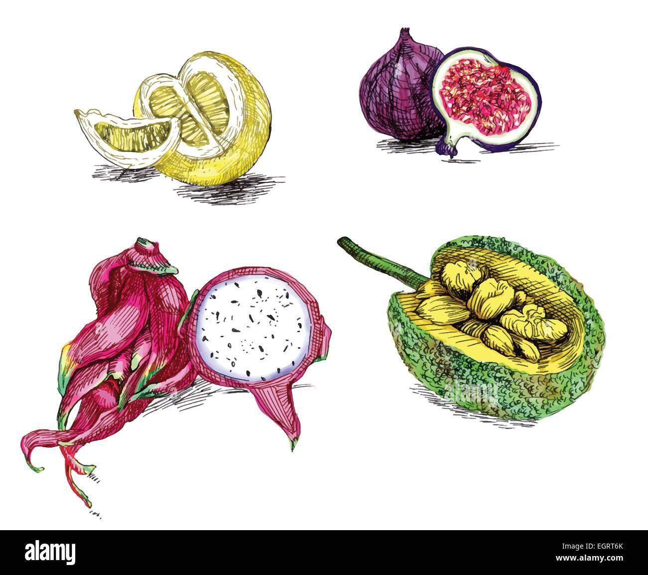 Tropische Früchte Kollektion Eine Hand Zeichnen Und Malen