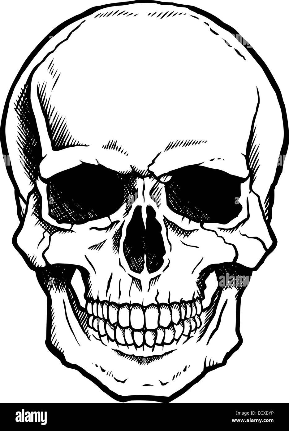 Gemütlich Menschlicher Schädel Markiert Bilder - Menschliche ...