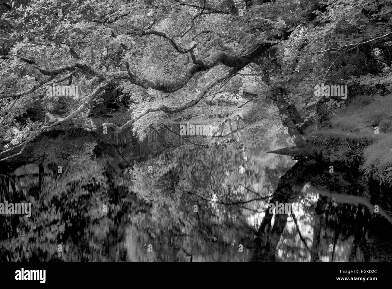 Ruhig ruhigen Gewässer des Gearhmeen Flusses, Nationalpark Killarney, Irland Stockbild