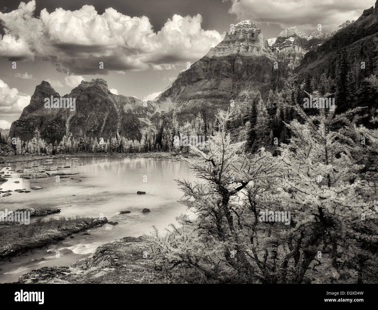 Mt-Huber und Herbst farbige Lärche. Opabin Plateau von British Columbia die kanadischen Rockies und Yoho-Nationalpark. Stockfoto