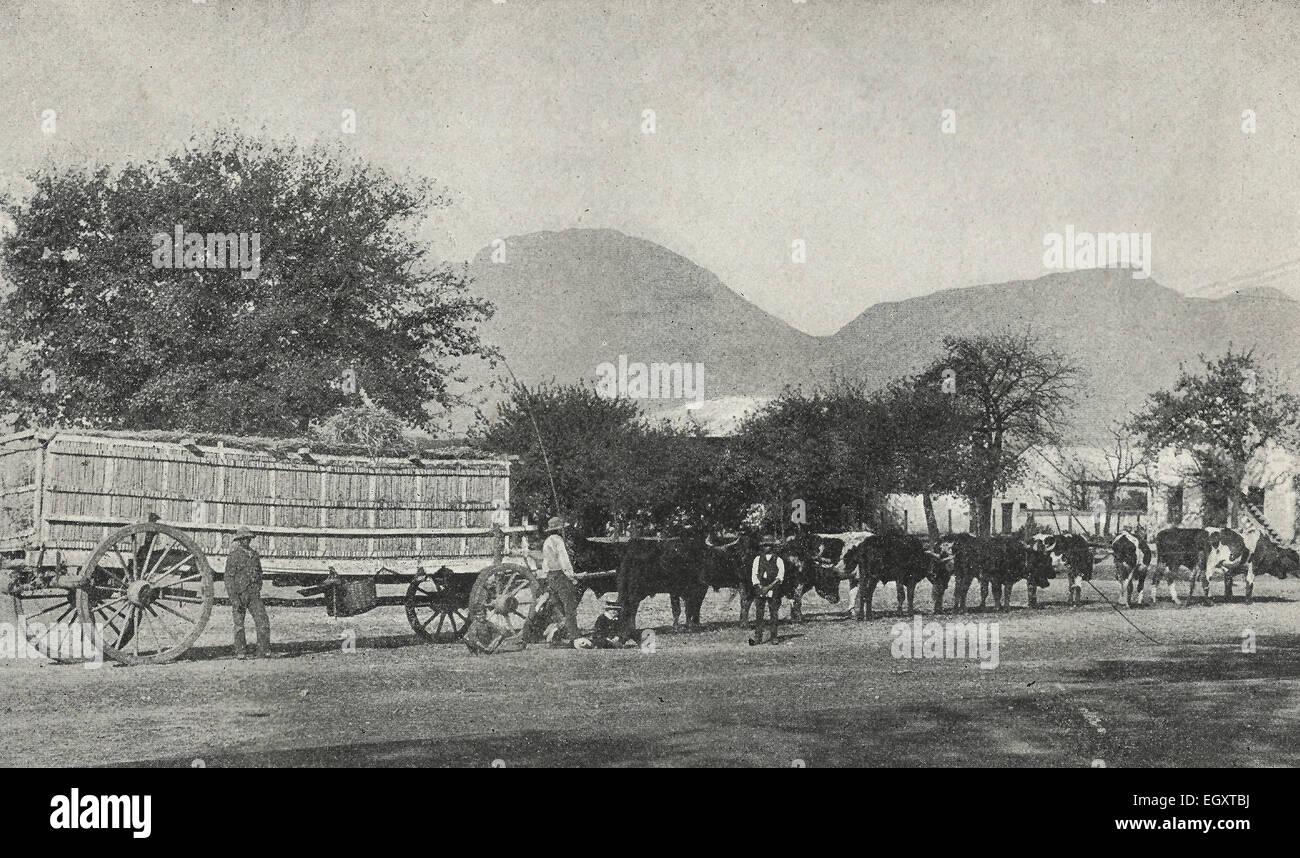 Gehen auf den Markt - In Südafrika den historischen Modus wurde mit Ochsen und Wagen.  Der große Wagen Stockbild