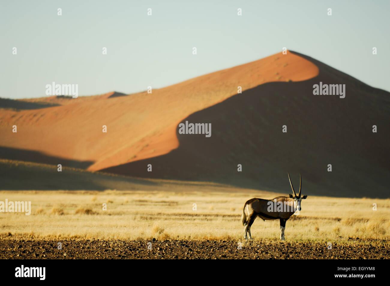 Rande der Berühmten Roten Sanddünen von Sossusvlei Stück Grasbedeckte Ebenen, sterben Nur Nach Den Stockbild