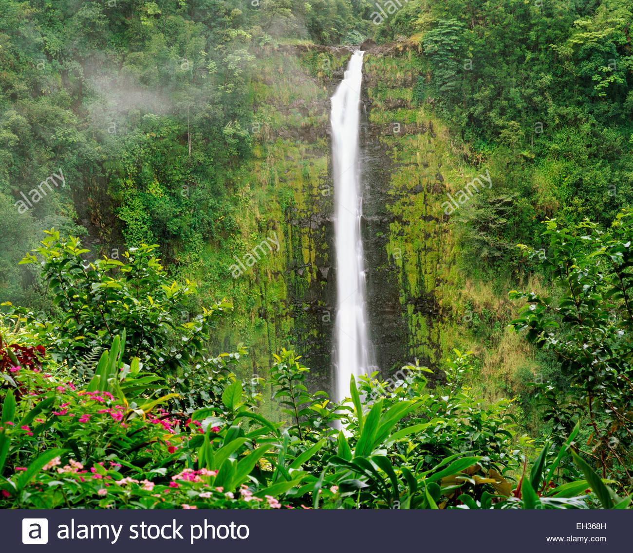 """Akaka Wasserfälle.  """"Akaka"""" übersetzt zu """"teilen"""" oder """"knacken"""".  Big Island, Stockbild"""