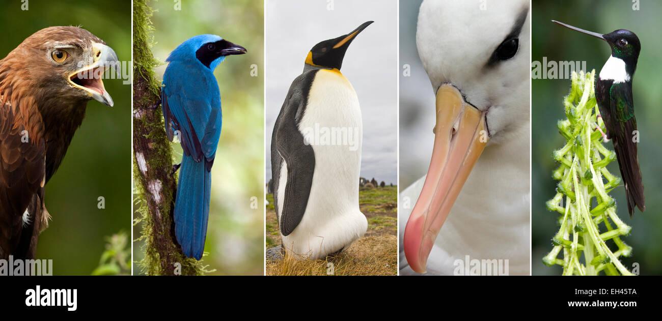 Eine Auswahl von Bildern der Vögel Stockbild
