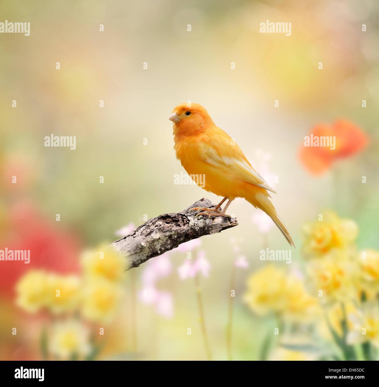 Gelber Vogel sitzend im Garten Stockfoto