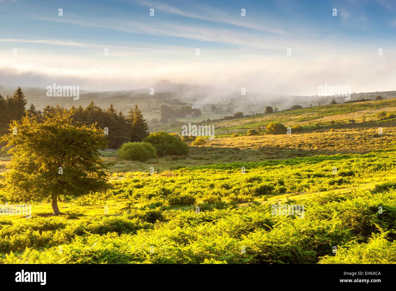 Dartmoor-Nationalpark, Holwell, Devon, England, Vereinigtes Königreich, Europa Stockbild