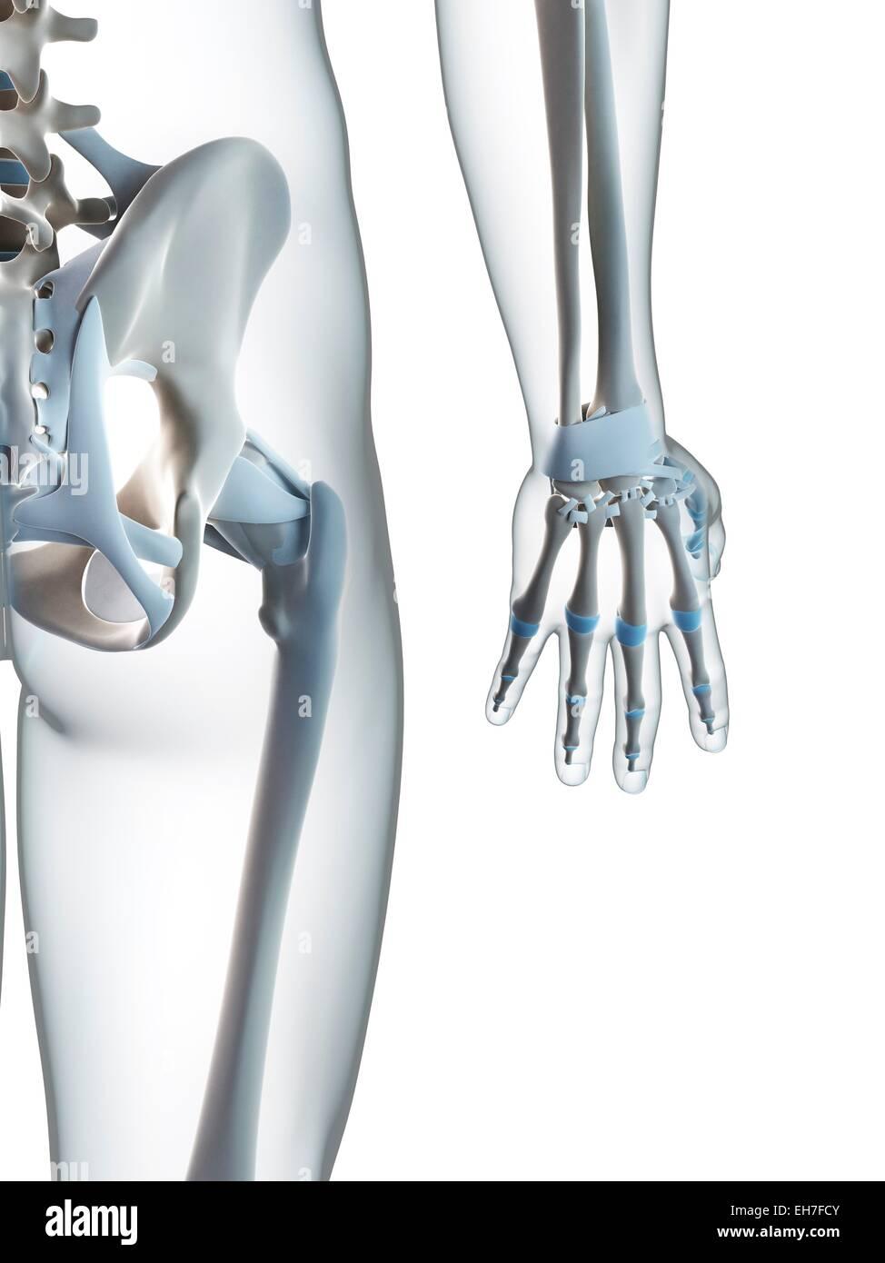 Großartig Anatomie Der Hand Sehnen Bilder - Anatomie Ideen - finotti ...