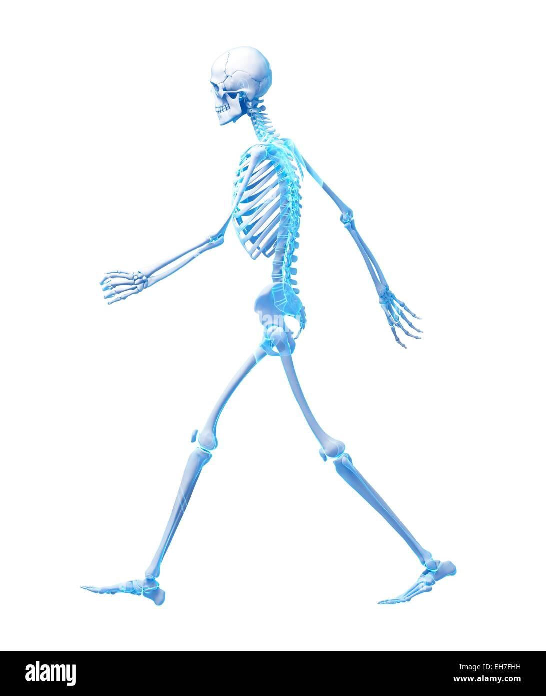 Fein Skelettanatomie Fuß Fotos - Anatomie Von Menschlichen ...