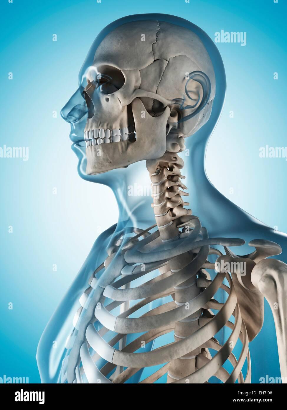 Fein Menschliches Körperbild Mit Etikett Bilder - Menschliche ...