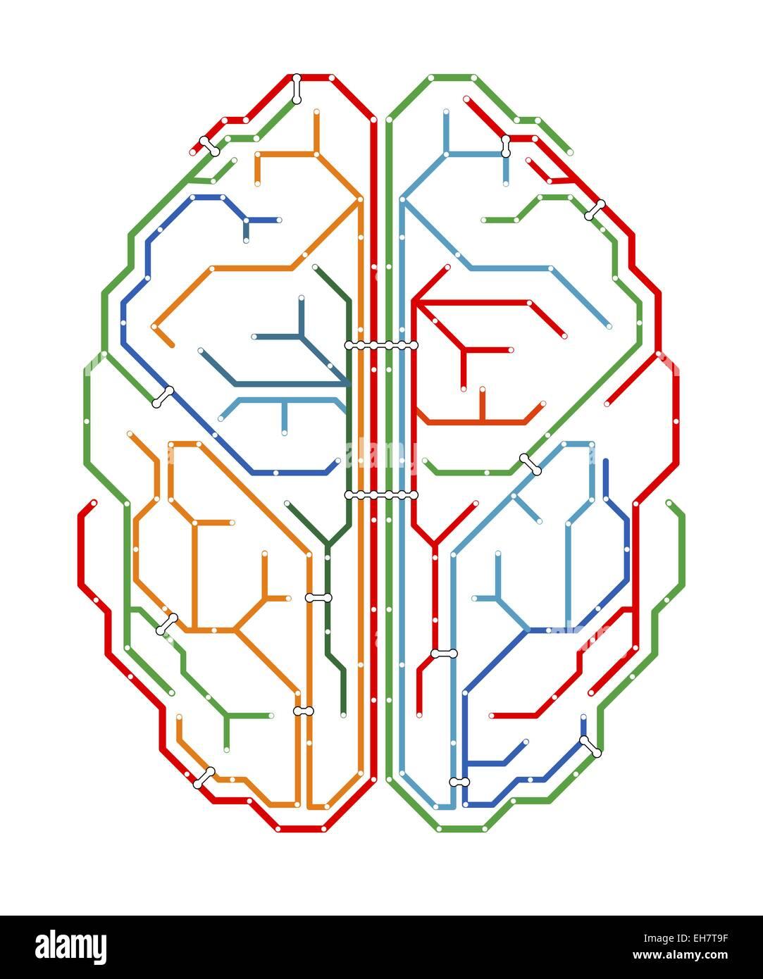 Gehirn, Netzwerk-Diagramm Stockfoto, Bild: 79463371 - Alamy