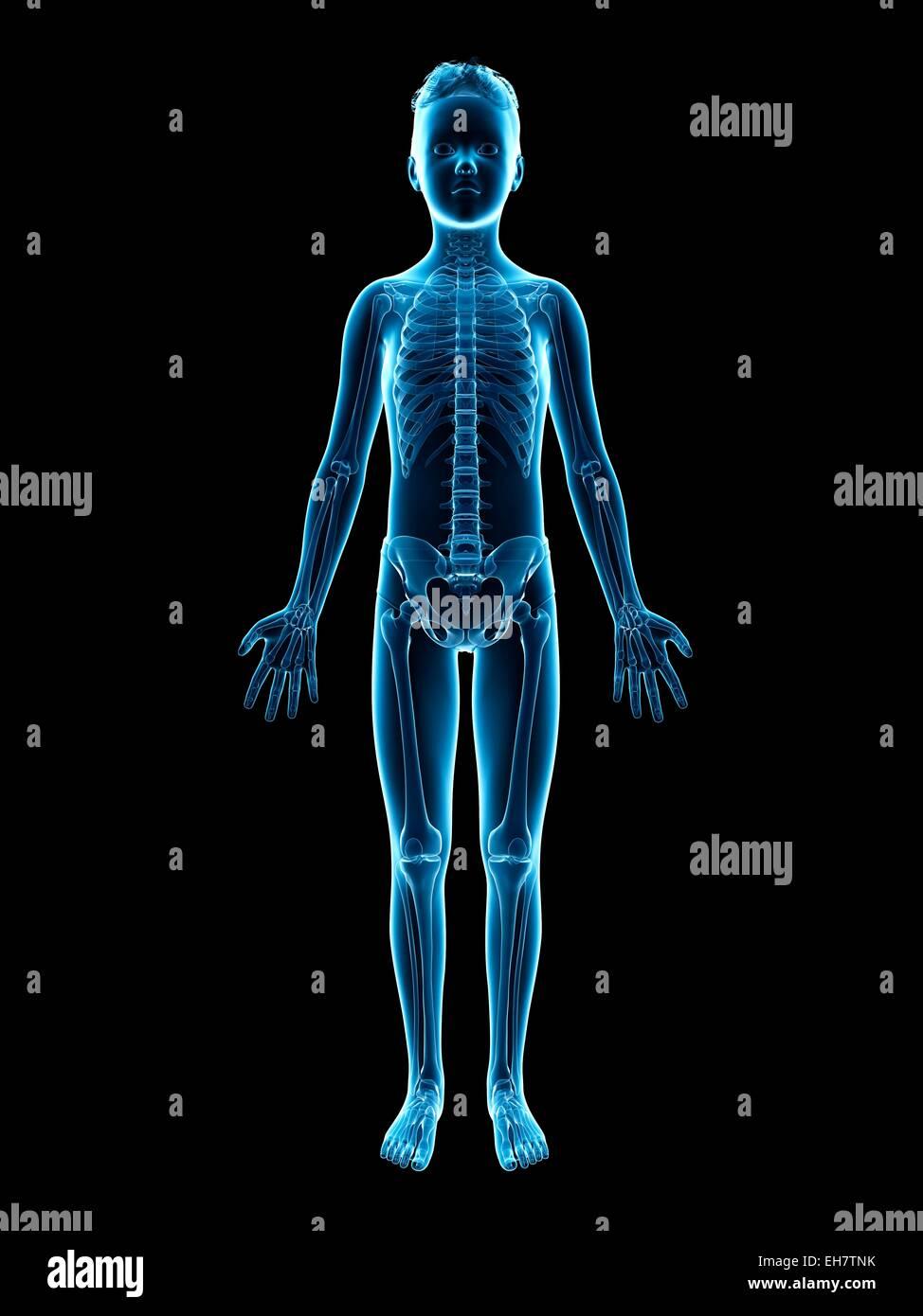 Ausgezeichnet Bild Des Skelettsystems Fotos - Menschliche Anatomie ...