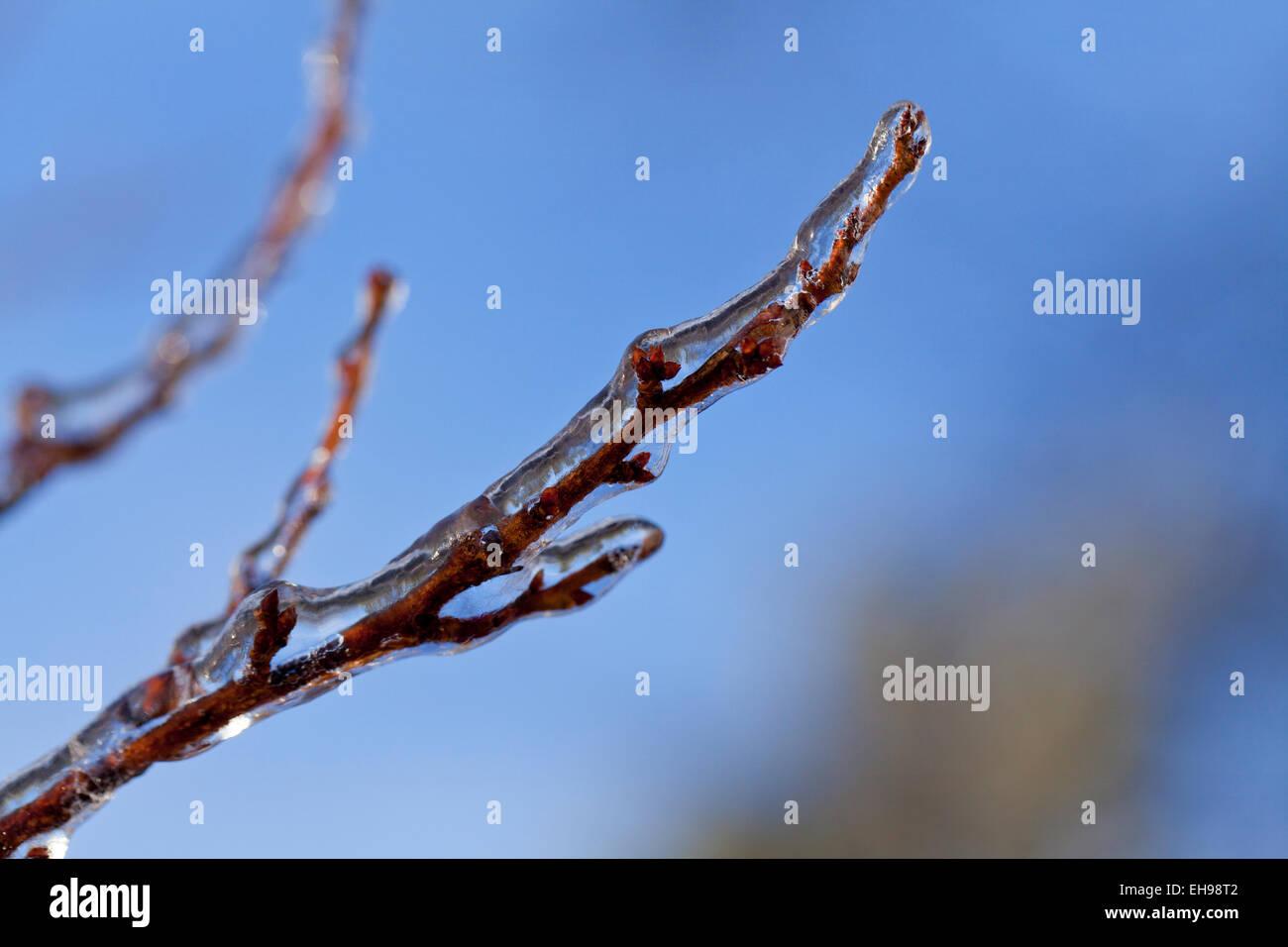AST eisbedeckt - Virginia USA Stockbild