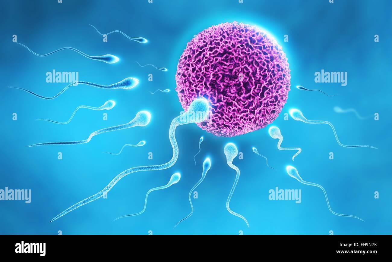 3D Abbildung des Sperma läuft nach dem Ei Stockbild