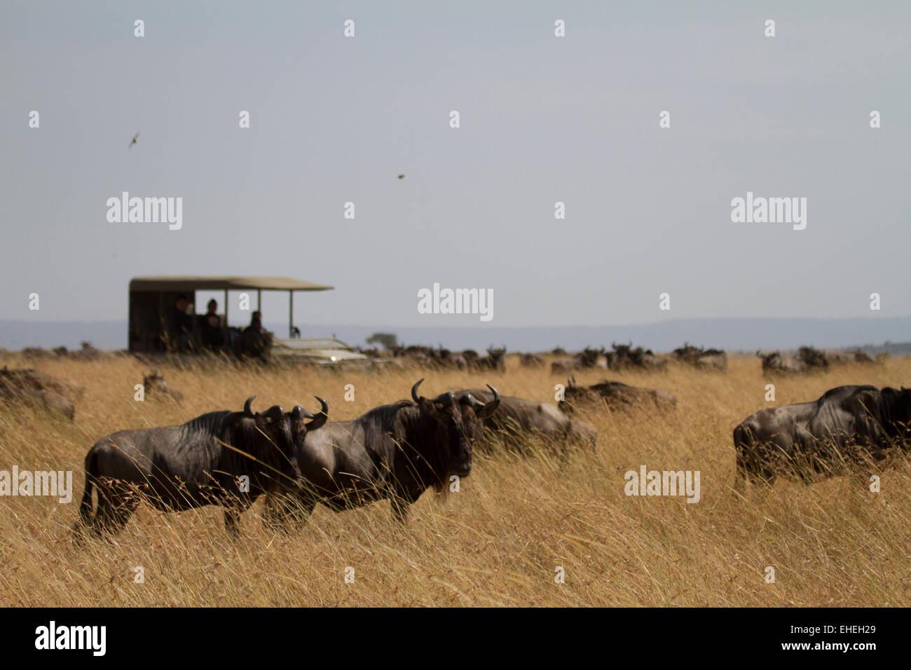 Touristen auf Safari Anzeigen der Migrations in der Serengeti Stockbild