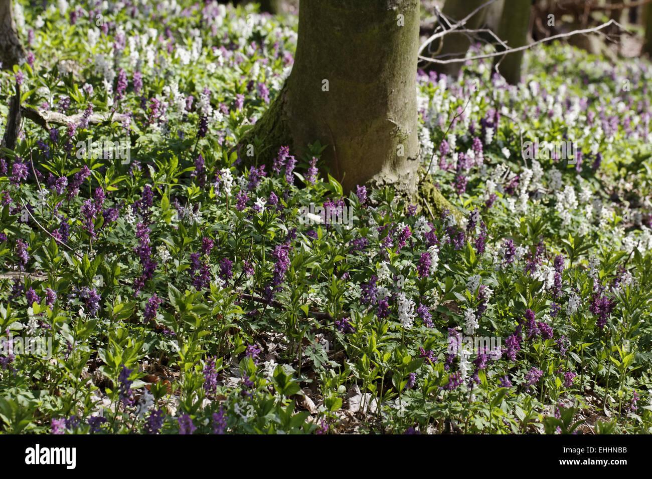 Blumen Im April Stockfotos Blumen Im April Bilder Alamy