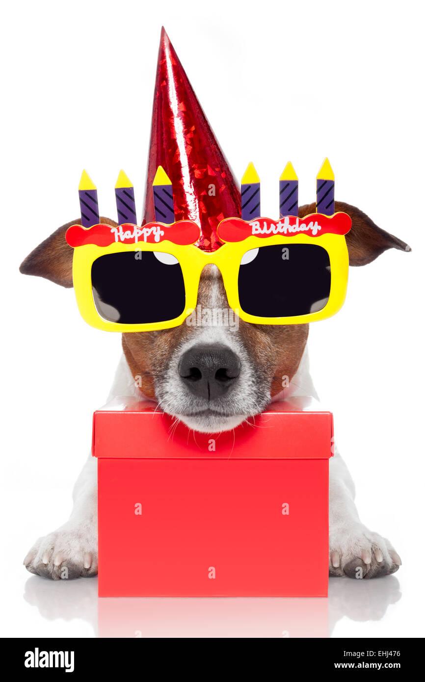 Geburtstag Hund Stockfoto Bild 79689098 Alamy