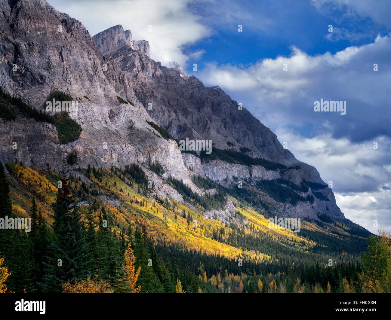 Berghang mit fallen farbige Espe Bäume. Banff Nationalpark, Alberta, Kanada Stockbild