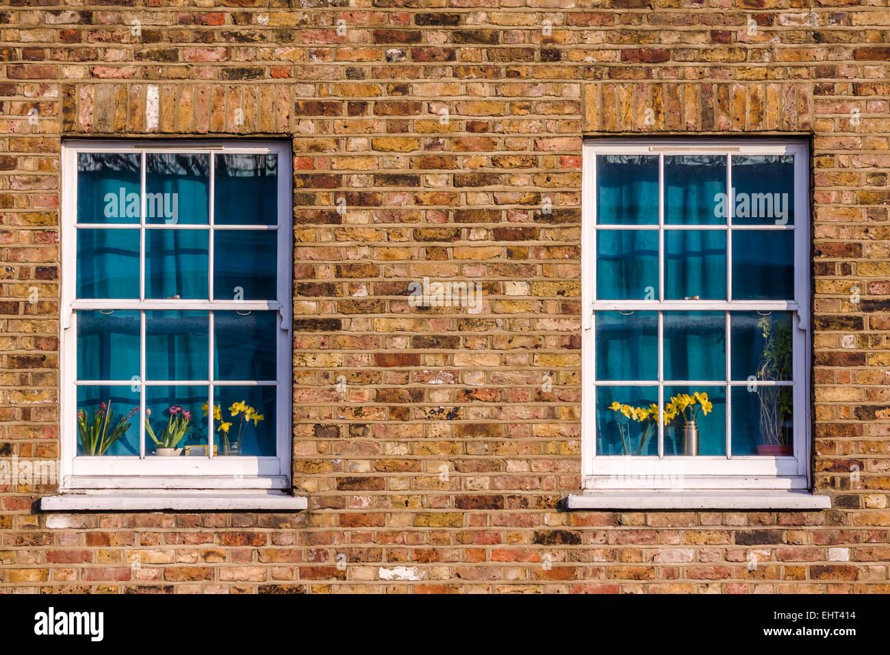 Zwei Fenster mit Vorhängen, in einer Nord-London-Straße. Stockbild